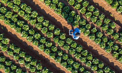 A smart farm.